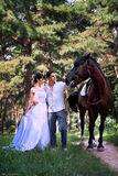 Bride and groom posing in the garden with a horse Stock Images