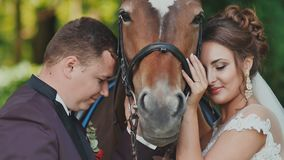 The bride and groom posing next to the horse. They joyfully stroke the horse. Happy together. Wedding day. stock video footage