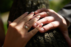 Bride and groom with rings. Touch of the hands of bride and groom with rings Stock Image