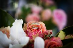 Bride and groom rings on flower with colourful background and foreground Royalty Free Stock Photos