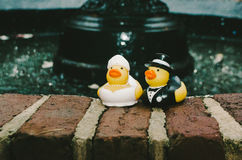 Bride & Groom Rubber Duckies Stock Image