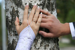 Bride and groom show their hands wearing wedding rings Stock Image