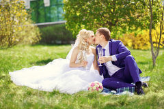 The bride and groom sit on the grass in the park, with glasses i Stock Photos