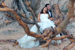 Bride and groom. Sitting on a big tree Stock Photos