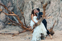 Bride and groom. Sitting on a big tree Stock Photo