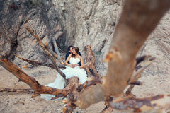 Bride and groom. Sitting on a big tree Royalty Free Stock Photo