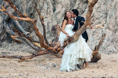 Bride and groom. Sitting on a big tree Stock Image