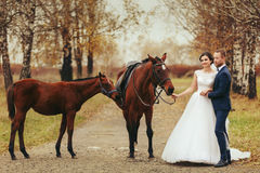 Bride and groom stand on the autumn road with horses Stock Photos
