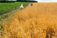 The bride and groom stand in the field, in summer. A men stands in wheat ears, a women on a green meadow Royalty Free Stock Images