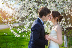 Bride and groom stand near a flowering tree in the spring garden Royalty Free Stock Photos