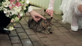 Bride and groom stroking a cat Royalty Free Stock Image