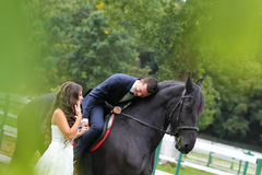 Bride and groom at stud black horse Stock Image