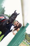 Bride and groom at stud black horse Stock Photography