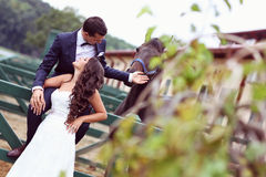Bride and groom at stud black horse Royalty Free Stock Images