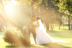 Bride and Groom surrounding by natural golden sunlight Stock Images