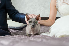 Bride and groom touch the cat Royalty Free Stock Photography