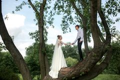 Bride and groom on the tree Stock Images