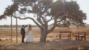 Bride and Groom under a Large Tree Silhouette stock video