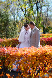 The bride and groom walk on autumn mall. Newlyweds are at the mall and look at each other. Autumn Stock Image