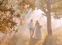 Bride and groom walk in the morning autumn forest in the rays of the bright sun, white fog behind, a gentle and sweet royalty free stock photos