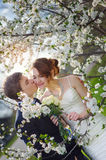 Bride and groom walking in the blossoming spring garden Stock Image