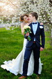 Bride and groom walking in the blossoming spring garden Stock Images