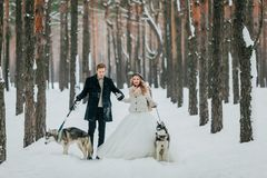 Bride and groom walks in the snowy forest with two siberian husky. Winter wedding. Artwork stock photography