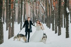 Bride and groom walks on the snowy trail with two siberian husky. Winter wedding. Artwork stock photos