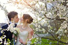 Bride and groom at the wedding kiss in spring walk Park Royalty Free Stock Photo