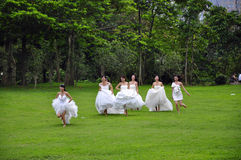 Bride. A group of bride take wedding photos in the park Stock Image
