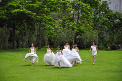 Bride. A group of bride take wedding photos in the park Royalty Free Stock Image