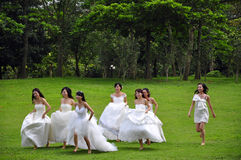 Bride. A group of bride take wedding photos in the park Stock Photography