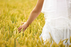 Bride hand in the field Royalty Free Stock Images