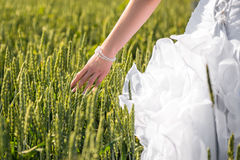 Bride hand in the field Royalty Free Stock Photos