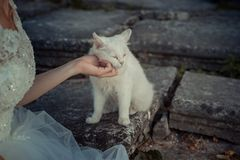 Bride hand is tenderly petting the lovely white cat. Bride hand is tenderly petting the lovely white cat Royalty Free Stock Photography