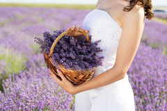 Bride holding basket with lavender flowers Royalty Free Stock Images