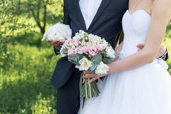 Bride holding in her hands a delicate wedding bouquet with white and pink tulips and pink small roses. Groom holding a white cute Royalty Free Stock Photos