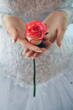 Bride is holding a rose Royalty Free Stock Image