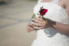 Bride holding a single rose Royalty Free Stock Photo
