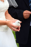Bride holding a dove at wedding Stock Photo