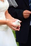 Bride holding a dove at wedding stock photo
