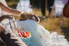 Bride holds rabbit on lap Royalty Free Stock Photos