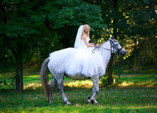 Bride on a horse in the forest Stock Photos