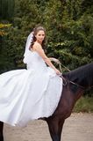 Bride on horse Royalty Free Stock Photography