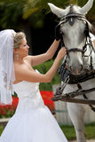 Bride with horses Stock Photo
