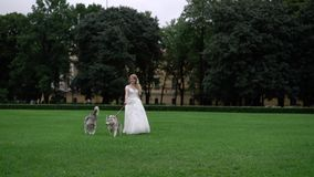 Bride with husky dogs. In park stock video footage