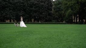 Bride with husky dogs. In park stock footage