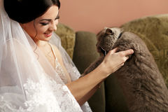 The bride keeps her cat Royalty Free Stock Photo