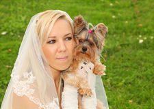 Bride keeps small dog stock image