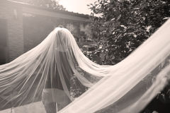 Bride with long veil. Bride with a long veil in the garden Stock Image
